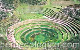Cultivos De Los Incas