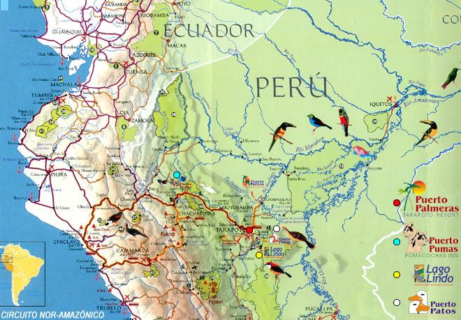 Circuito Nor : Aves del circuito nor amazónico