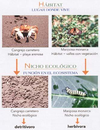 5 Ejemplos de nicho ecologico
