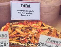 Cultivos de los Incas - Plantas Medicinales: TARA